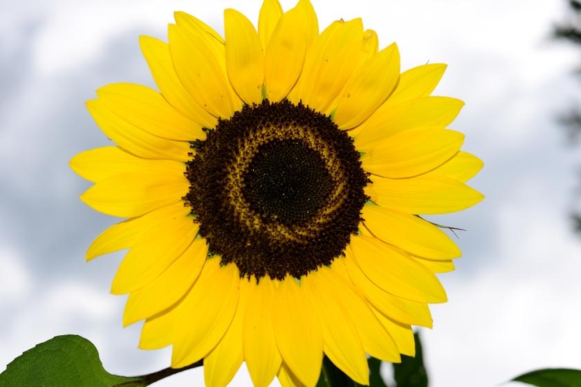 8-6-17 flowers (6)